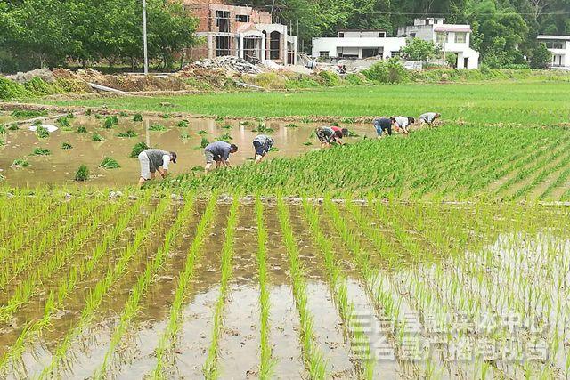 三大灌区开闸放水 保证40多万亩水稻栽插